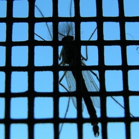 AJM komarniki vam nudijo učinkovito zaščito pred mrčesom.