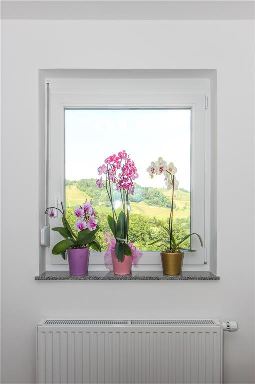 Količina svetlobe je za uspešno rast rastlin ključnega pomena.